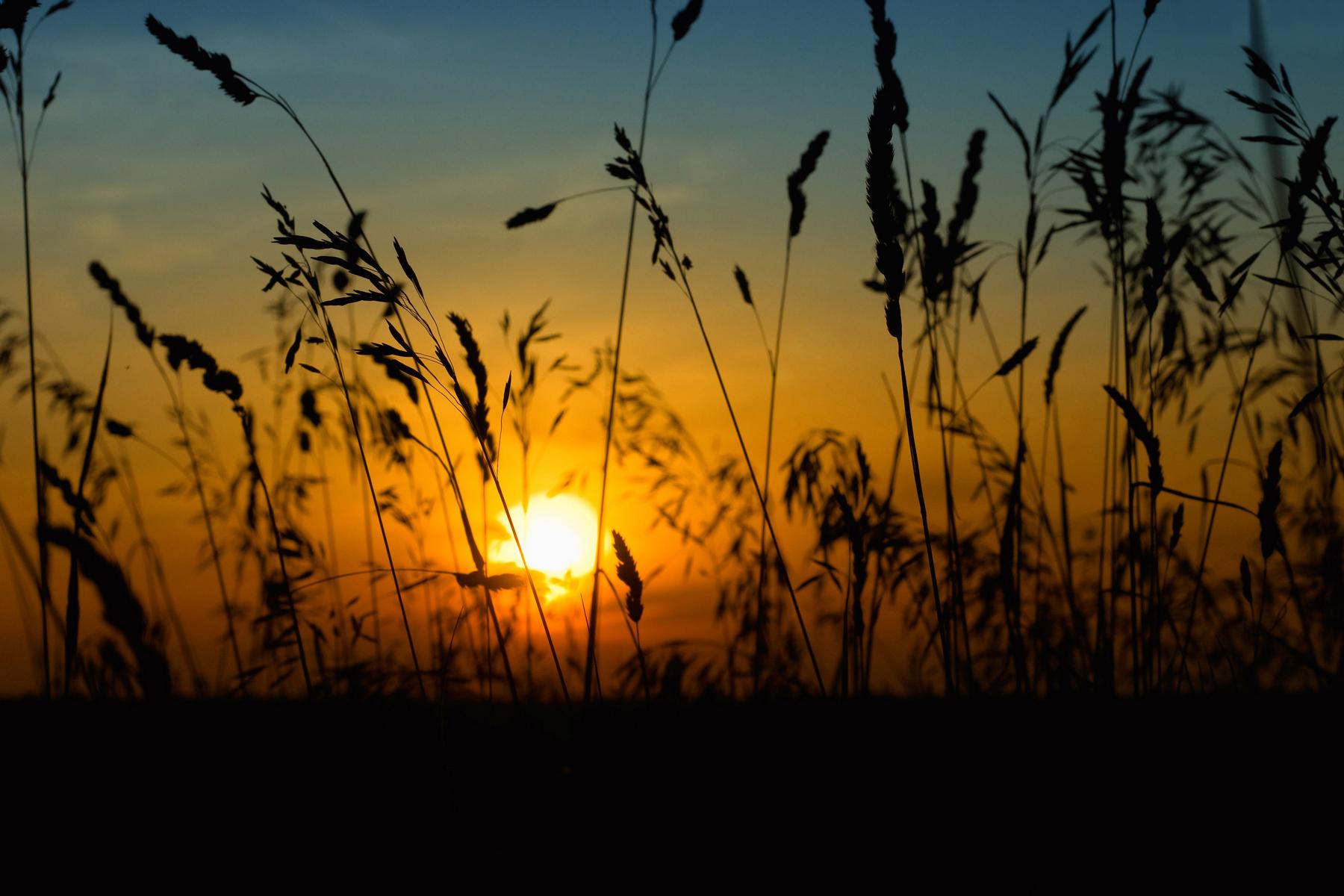 закат в роще. красивая,природа,солнце,удивительный,закат,пейзаж.